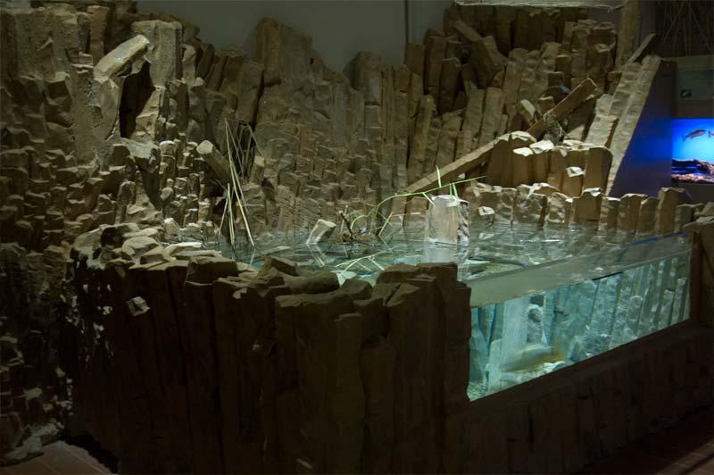 Alla scoperta dell 39 acquario di bolsena for Stagno artificiale
